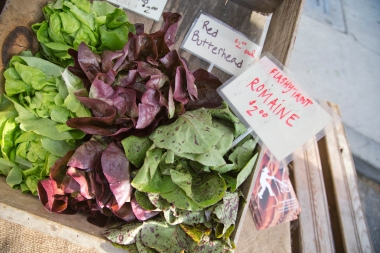 Flashy Trout Lettuce heads