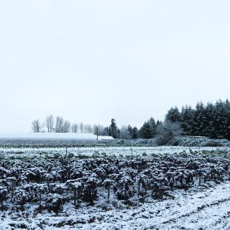 Steel Wheel Farm in the winter